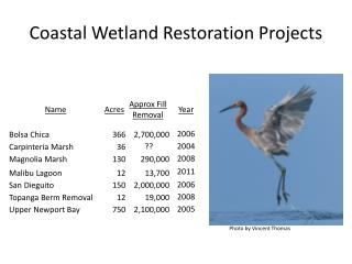 Coastal Wetland Restoration Projects
