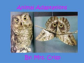 By: Mrs. Crisp