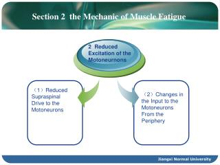 Section 2  the Mechanic of Muscle Fatigue