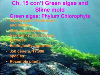 Ch. 15 con t Green algae and Slime mold Green algea: Phylum Chlorophyta