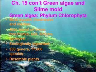 Ch. 15 con t Green algae and Slime mold Green algea: Phylum Chlorophyta