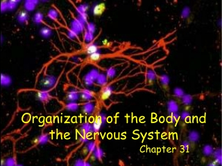 Chapter 31  Organization and Control of the Endocrine System