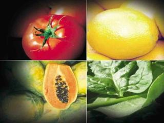 Plantas Que Curan La Diabetes