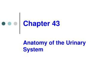 Anatomy of the Urinary System
