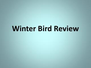 Winter Bird Review