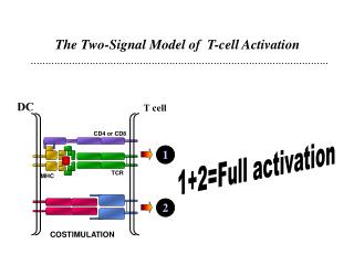 The Two-Signal Model of  T-cell Activation