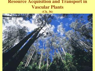 Resource Acquisition and Transport in Vascular Plants Ch. 36