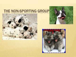 The Non-Sporting Group