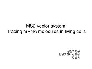 MS2 vector system: Tracing mRNA molecules in living cells