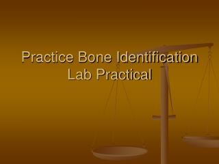 Practice Bone Identification Lab Practical