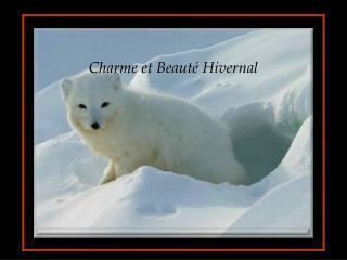 Charme et Beaut  Hivernal