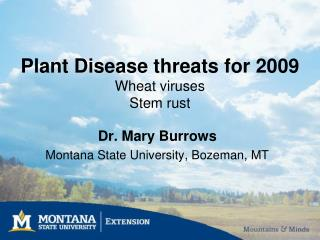 Plant Disease threats for 2009 Wheat viruses Stem rust