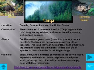 More Taiga Animals and Plants