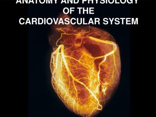 ANATOMY AND PHYSIOLOGY  OF THE  CARDIOVASCULAR SYSTEM