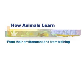 How Animals Learn