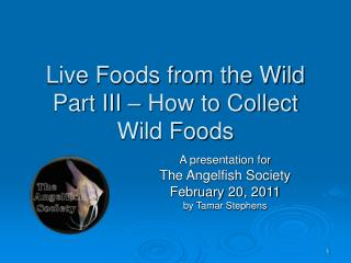 Live Foods from the Wild Part III   How to Collect Wild Foods