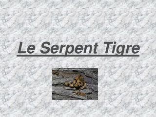 Le Serpent Tigre