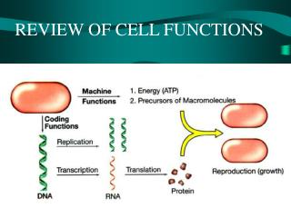 REVIEW OF CELL FUNCTIONS