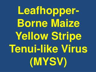 Leafhopper-Borne Maize Yellow Stripe Tenui-like Virus MYSV