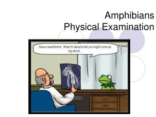 Amphibians Physical Examination
