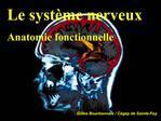 Le syst me nerveux Anatomie fonctionnelle