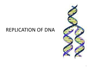 DNA renaturation studies and Genome structure