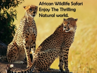 Visit African Wildlife Safari and the Enjoy Thrilling Natura