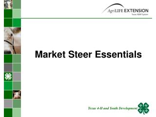 Market Steer Essentials