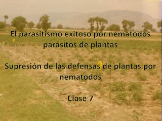 El parasitismo exitoso por nematodos par sitos de plantas  Supresi n de las defensas de plantas por nematodos  Clase 7