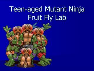 Teen-aged Mutant Ninja Fruit Fly Lab