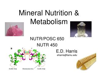 Mineral Nutrition  Metabolism