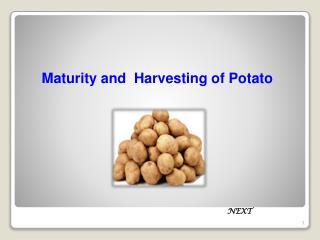 Maturity and  Harvesting of Potato