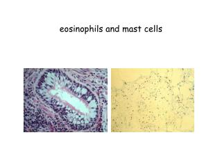 Eosinophils and mast cells