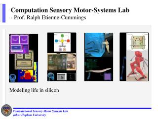 Computation Sensory Motor-Systems Lab - Prof. Ralph Etienne-Cummings