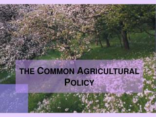 Europe   Common Agricultural Policy CAP