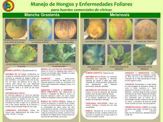 Manejo de Hongos y Enfermedades Foliares  para huertos comerciales de c tricos