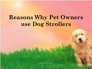 Reasons Why Pet Owners Use Dog Strollers