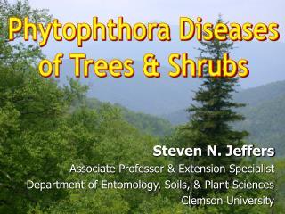 Phytophthora Diseasesof Trees  Shrubs