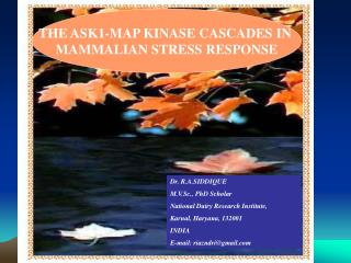 THE ASK1-MAP KINASE CASCADES IN MAMMALIAN STRESS RESPONSE