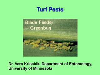 Dr. Vera Krischik, Department of Entomology,  University of Minnesota