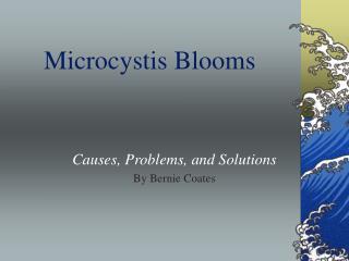 Microcystis Blooms