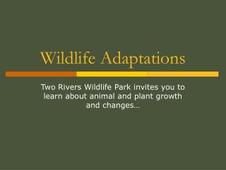 Wildlife Adaptations