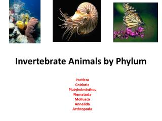 Invertebrate Animals by Phylum