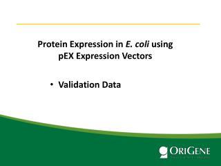 Protein Expression in E. coli Through Various Destination Vectors