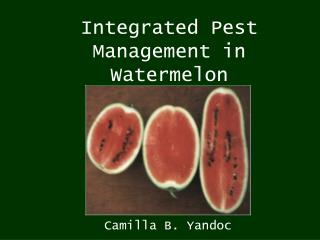 Integrated Pest Management in Watermelon