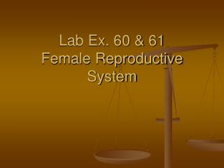 Lab Ex. 60  61  Female Reproductive System