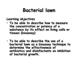 Bacterial lawn