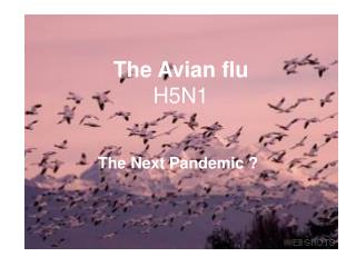 The Avian flu H5N1