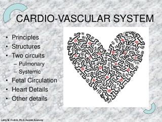 CARDIO-VASCULAR SYSTEM