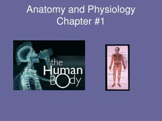 Anatomy and Physiology Chapter 1